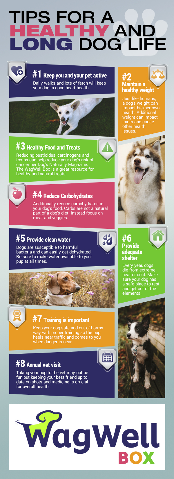 Tips for a healthy and long dog life